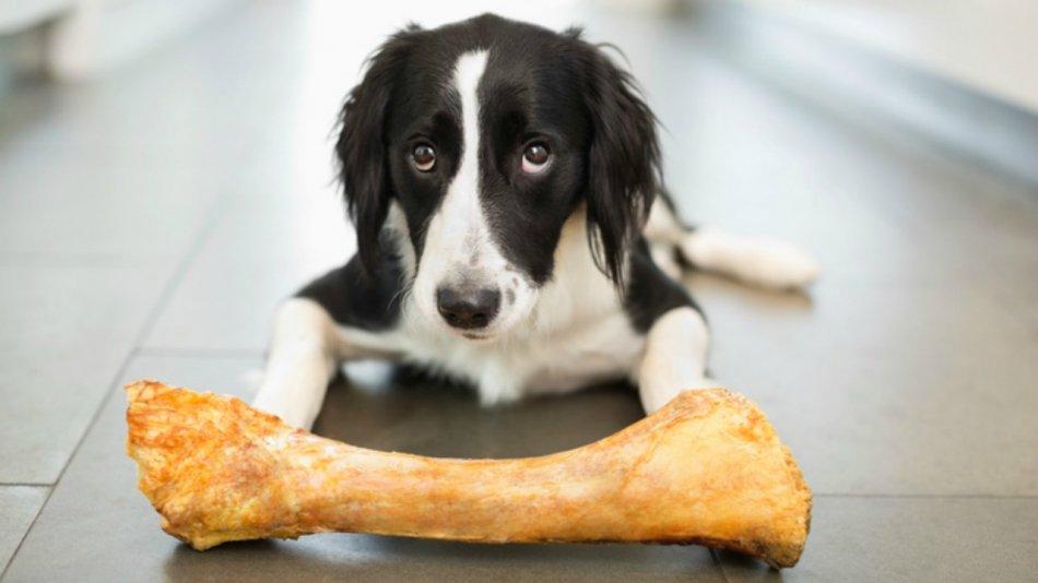 Какие лакомства давать собаке