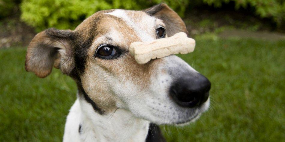 Какие лакомства давать собакам