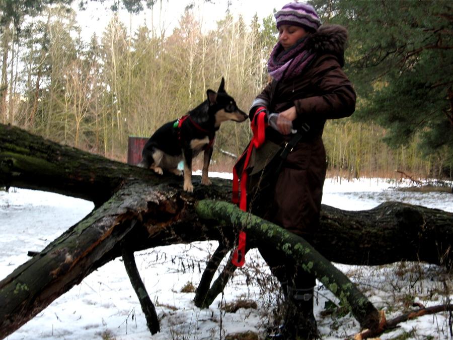 Прогулка с собакой в лесу