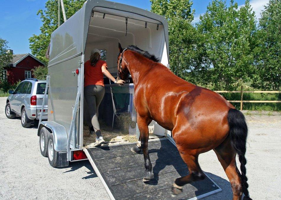 Лошадь переезжает в новую конюшню фото