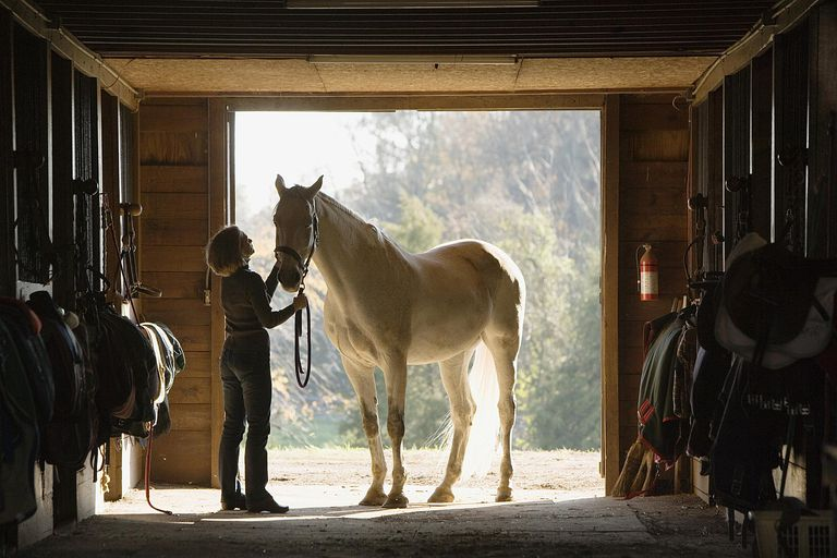 Переезд лошади в новую конюшню фото