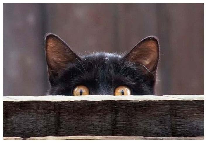 Черная кошка прячется
