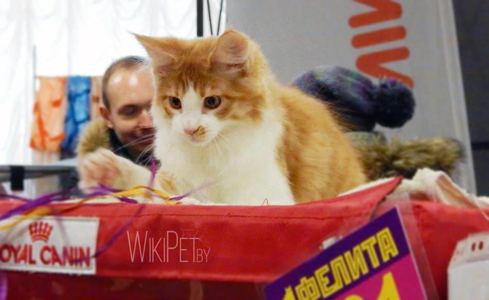 Международная выставка кошек: фотоотчет