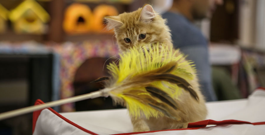Кошка играет фото