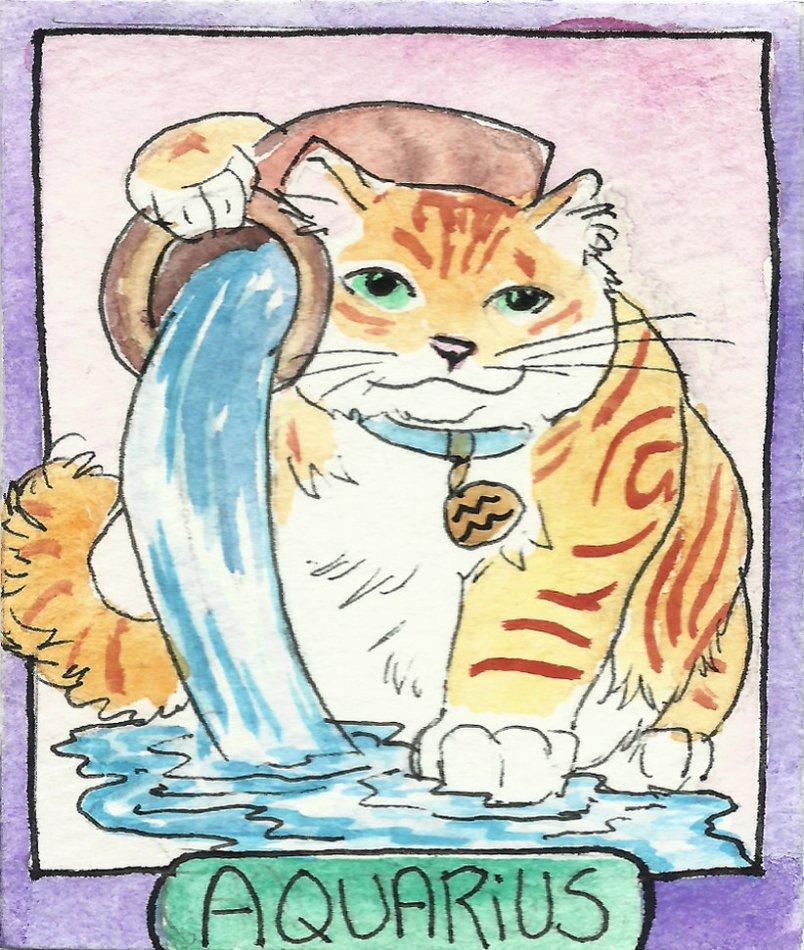 Кошка-Водолей