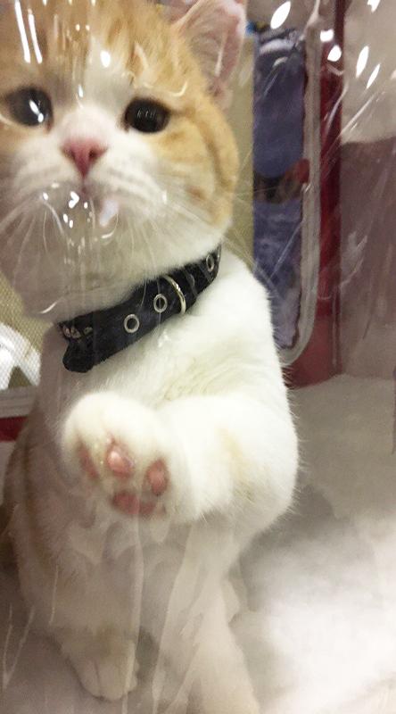 wikipet, выставка, кошки, коты, википет