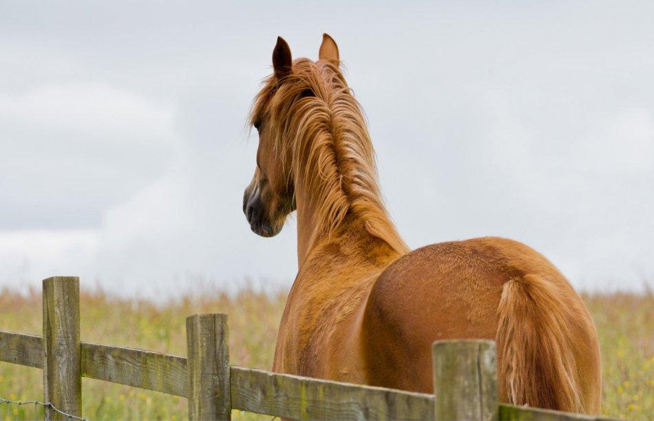 Лошадь смотрит вдаль