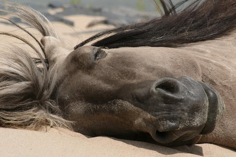 Лошадь спит фото