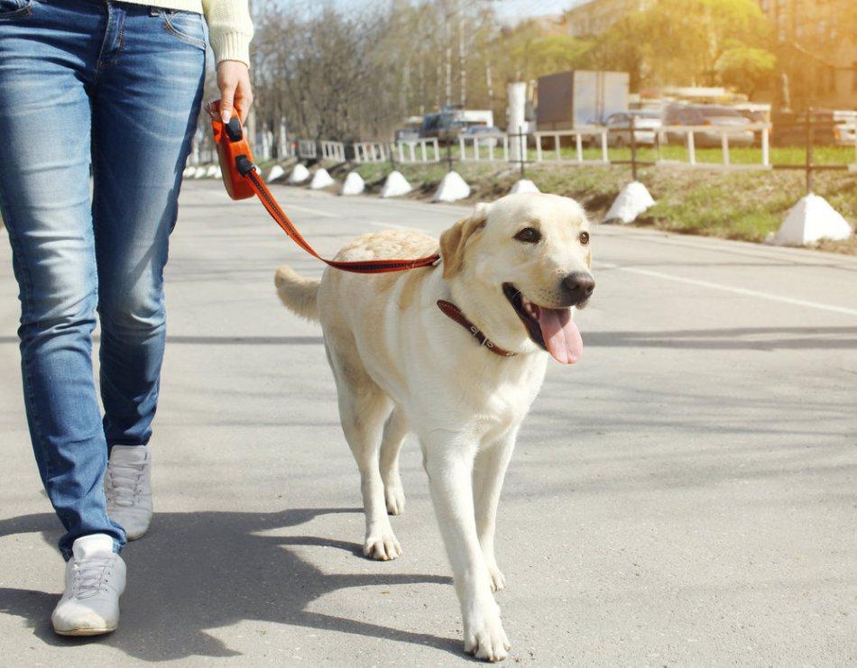 как укрепить суставы и связки собаки