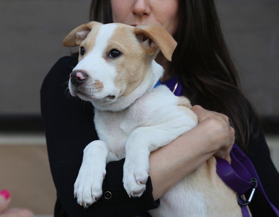 Брошенная собака фото