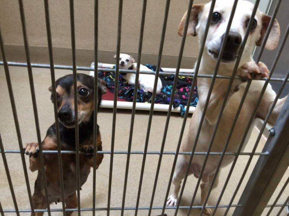 Сбаки в приюте фото
