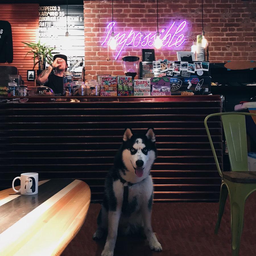 собака хаски в кафе на полу