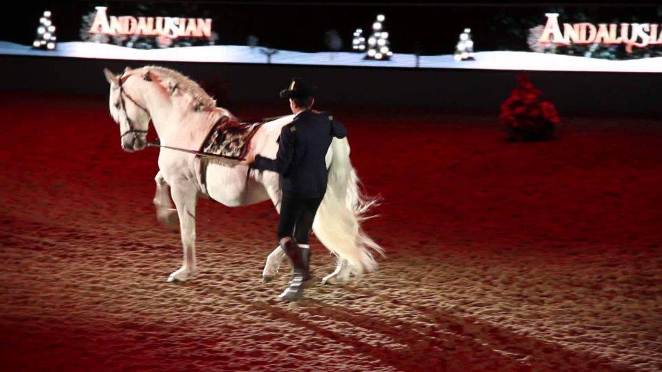 Выступление андалузской лошади