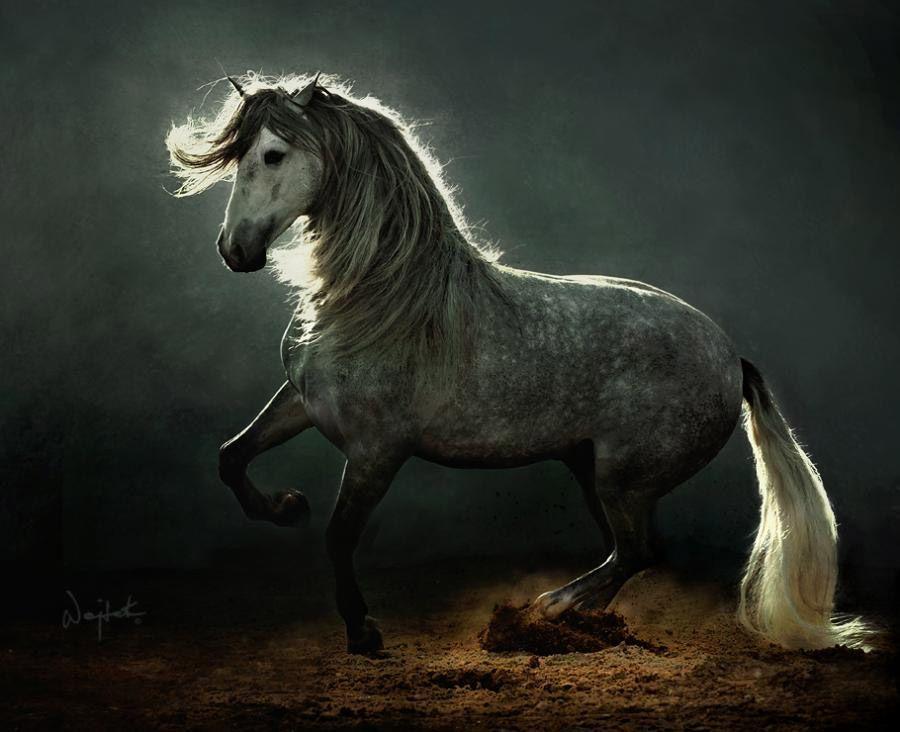 Андалузская лошадь на фотографии Войтека Квятковского