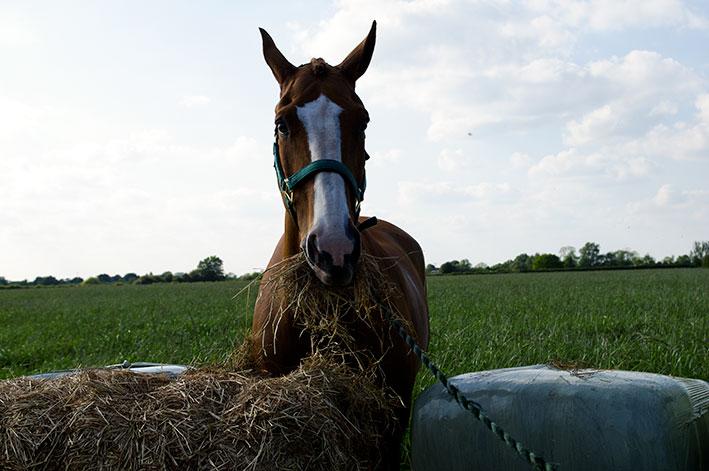 Сенаж для лошади фото