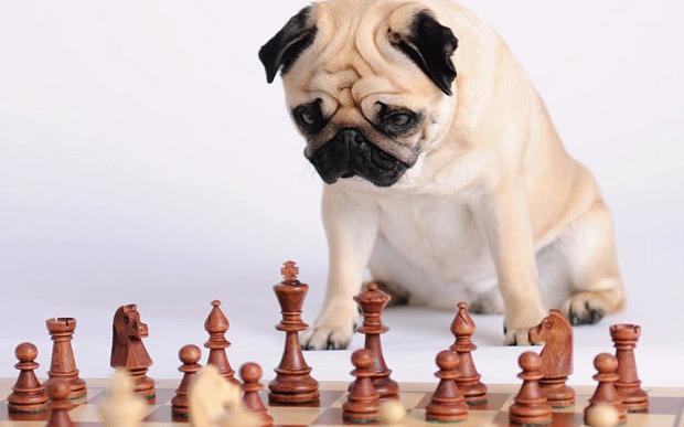Интеллект собаки и порода фото