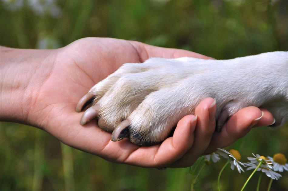 Лапа собаки в руке человека фото