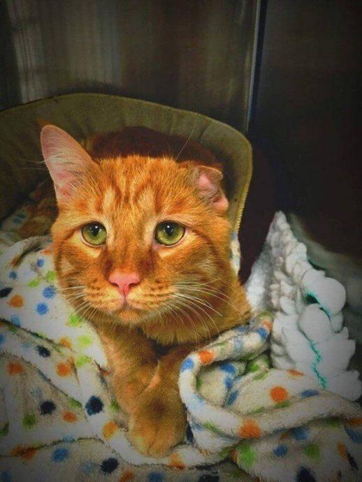 кот,кошка,приют,бездомные животные