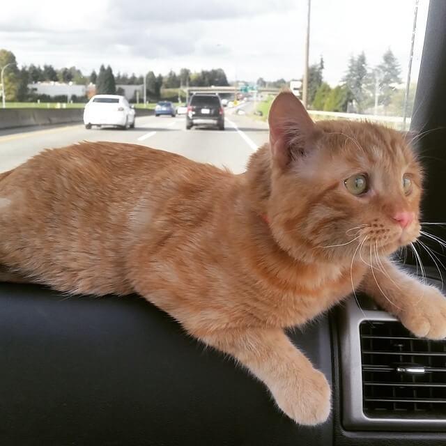 кот,кошка,приют,домашнее животное.бездомное животное