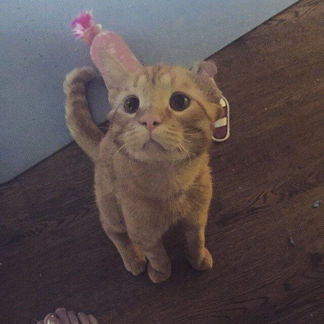 кот.кошка,животное из приюта,дом
