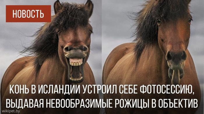 лошадь кривляется