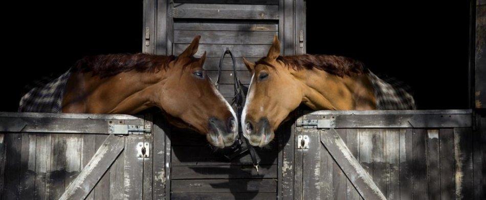 Лошади тянутся друг к другу фото