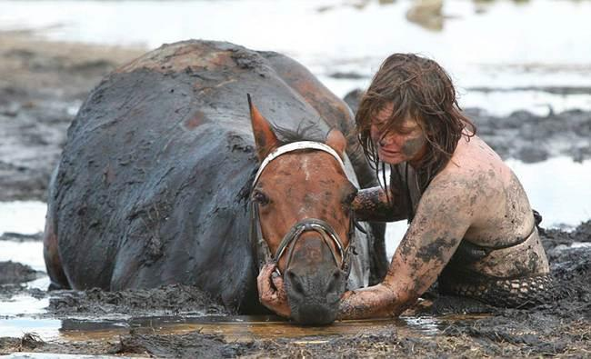 прилив,лошадь,конь,грязь