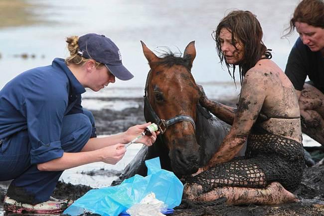 конь,тина,лошадь,прилив,девушка