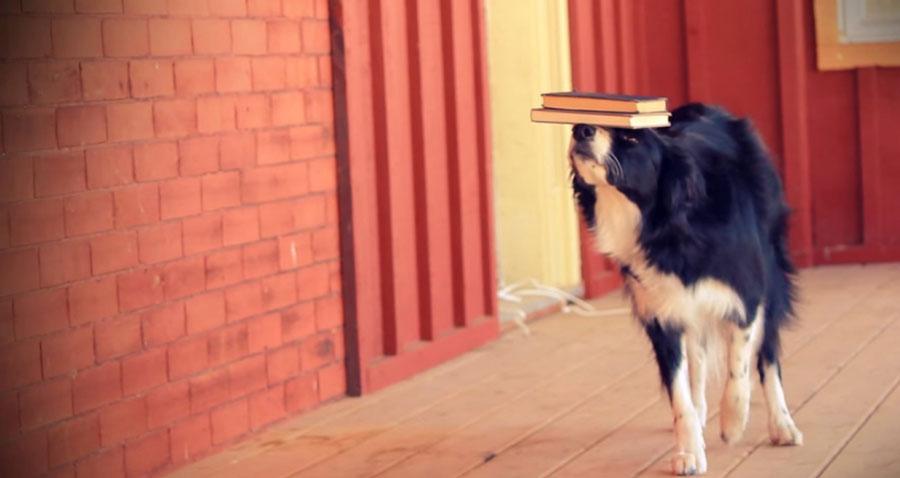 пес показывает трюки