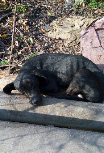 пес,собака,питомец,бездомное животное