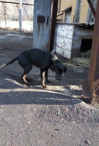 собака,питомец,пес,улица,бездомное животное,приют