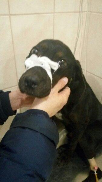 собака,приют,бездомное животное,пес