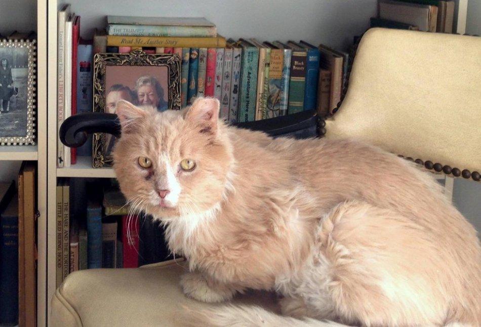 кот,кошка,питомец,бездомное животное,приют,волонтеры
