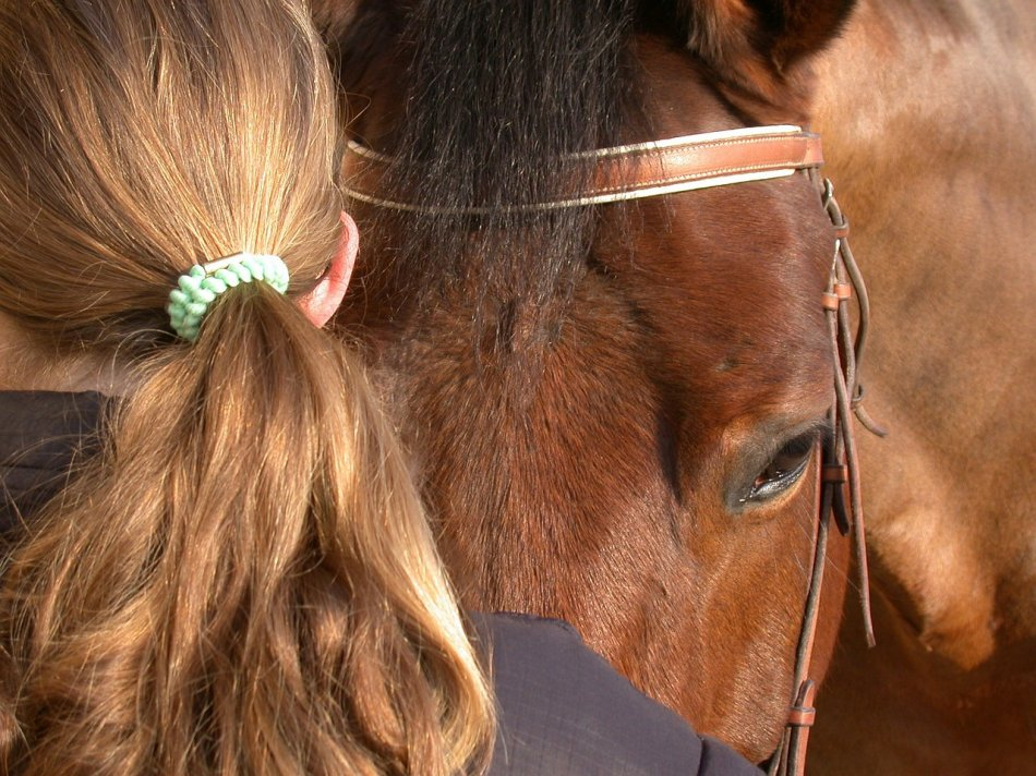 Лошадь и человек