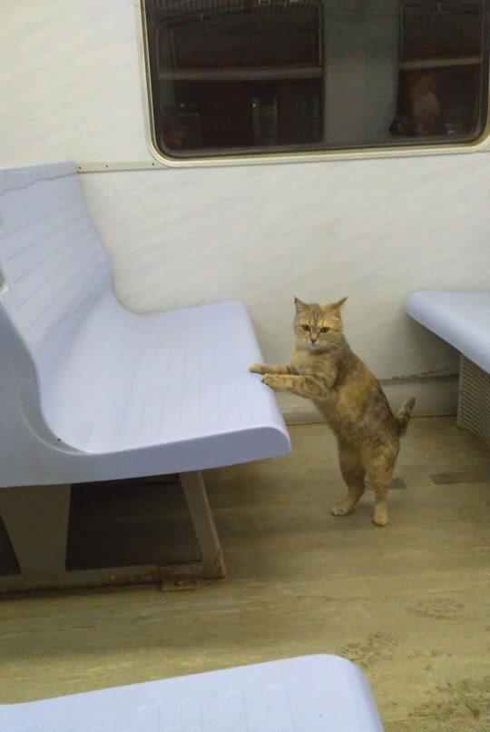 кот,кошка,приют,бездомное животное