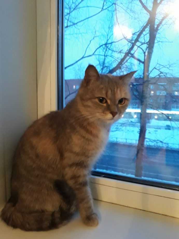 кот,кошка,домашее животное,бездомное животное