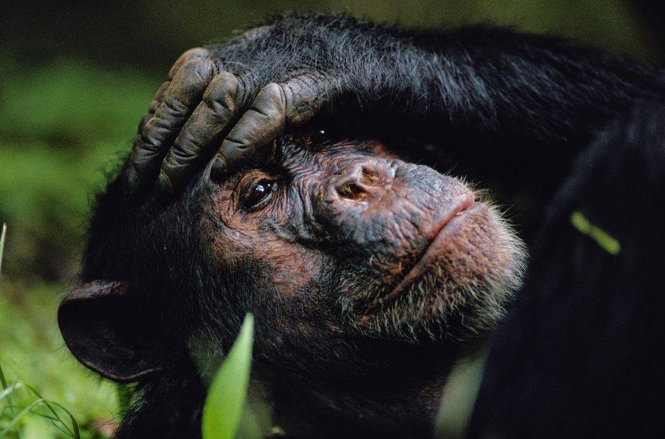 Животные обладают сознанием фото