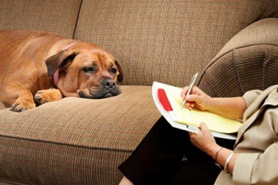 картинки животных для психолога это неотъемлемая