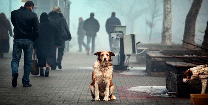 бездомная собака сидит на улице