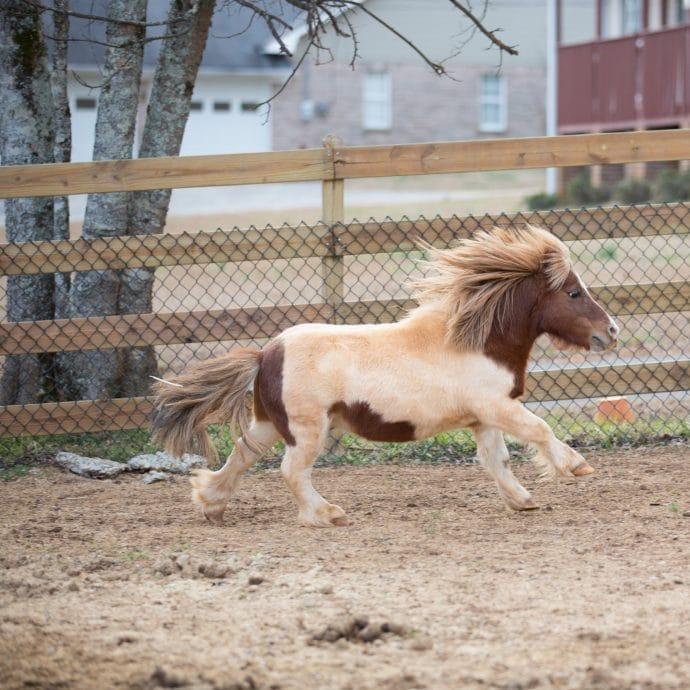 лошадь, собака, животное, домашнее животное, дикое животное, история