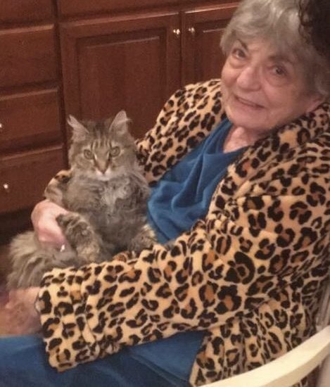кот Тайгер, котёнок, домашнее животное, любимец, кот