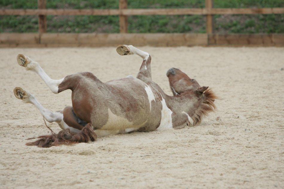 Внутренняя закупорка кишечника у лошади