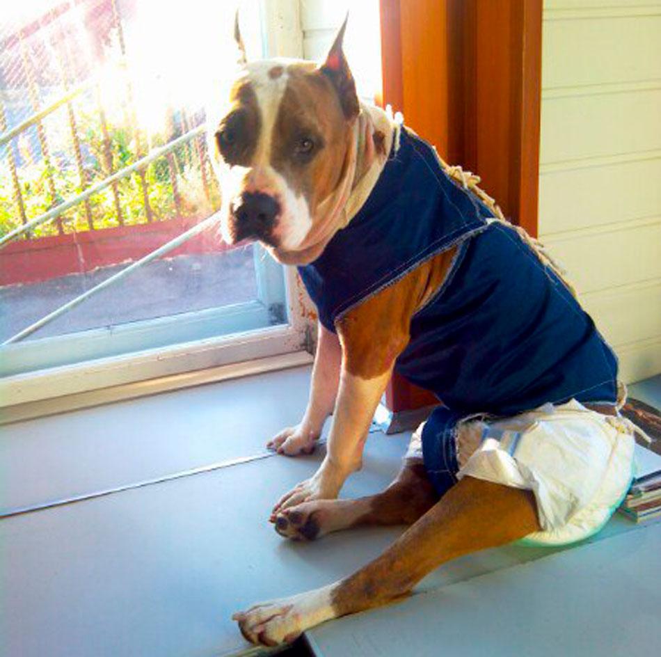 собака, домашнее животное, спасение, википет, ищу хозяина