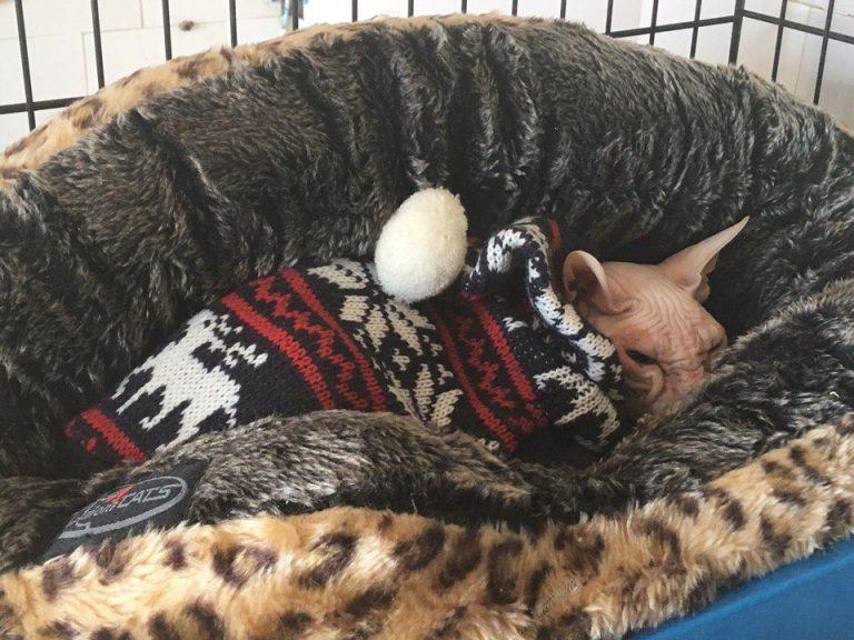кот,кошка,бездомное животное,волонтеры,приют
