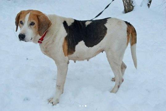 собака,пес,зима,ищет новый дом