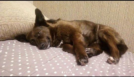 пес,собак,приют,бездомное животное,помощь