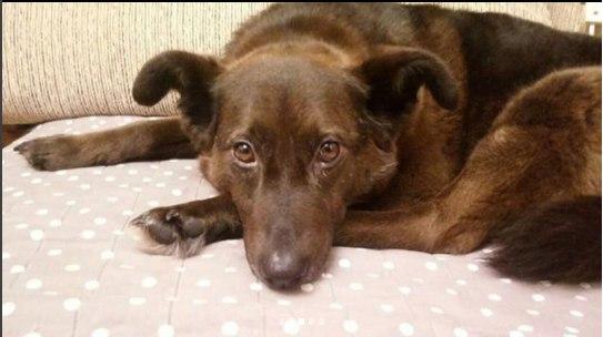 пес,собака,бездомное животное,помощь