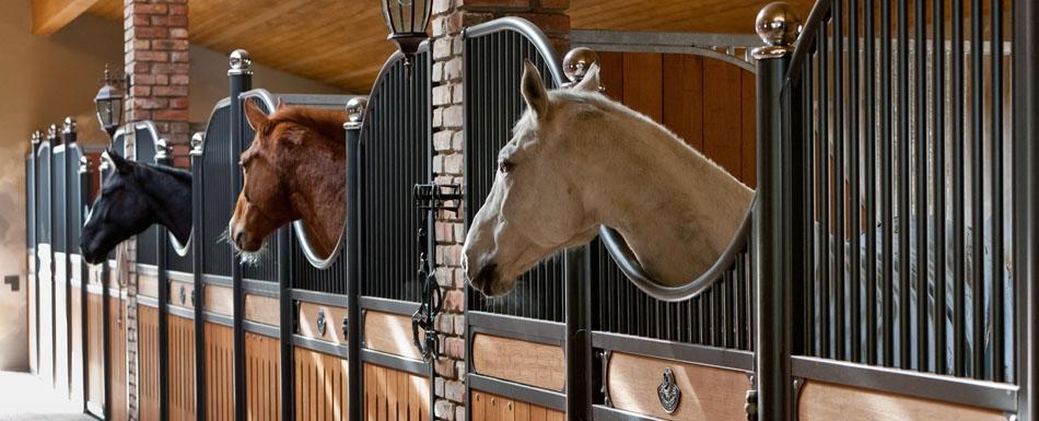 Конюшенное содержание лошади