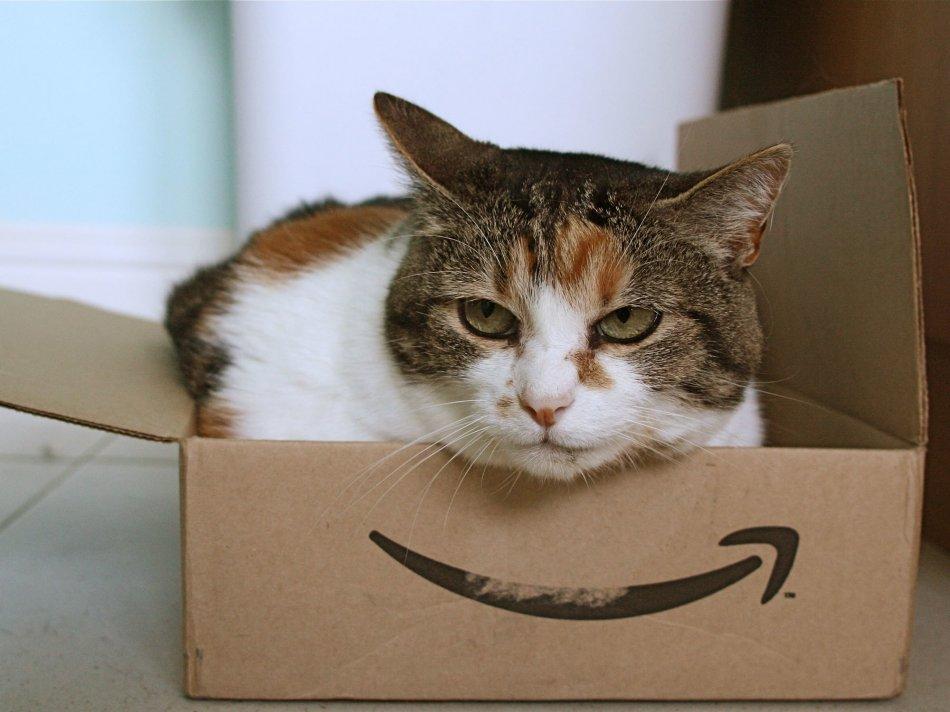 Как кошке справиться со стрессом
