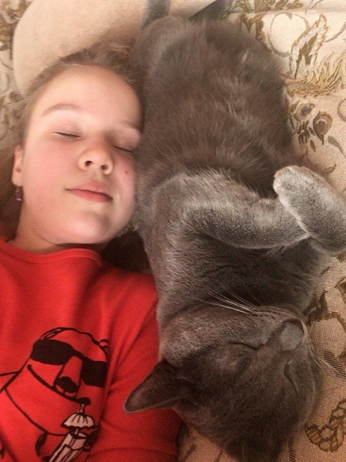 кот,кошка.домашнее животное